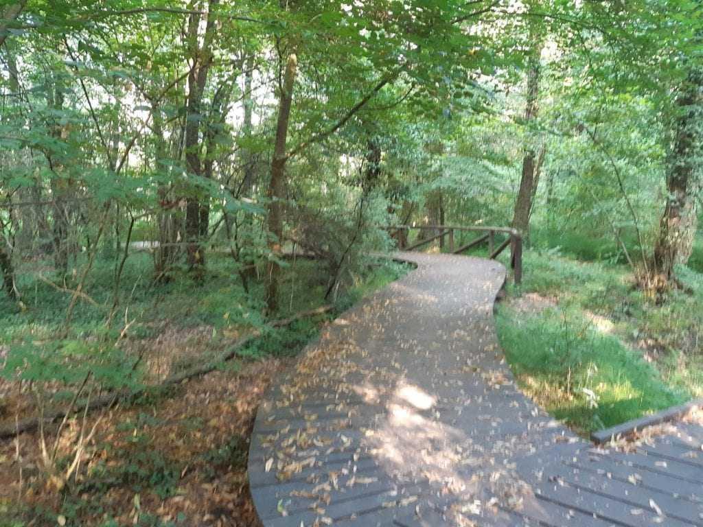 Sentiero gran bosco dei fontanassi